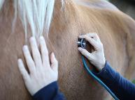 Homöopathie für Tiere in Hemer