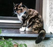 Homöopathie für Katzen in Hemer