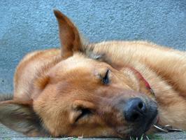Hund, Ernährung, BARF, Naturheilkunde, Hemer, Iserlohn, Menden